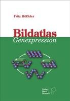 Fritz Höffeler - Bildatlas Genexpression