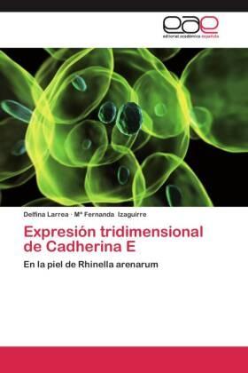 Mª Fernanda Izaguirre, Delfin Larrea, Delfina Larrea - Expresión tridimensional de Cadherina E - En la piel de Rhinella arenarum