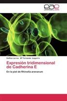 Mª Fernanda Izaguirre, Delfin Larrea, Delfina Larrea - Expresión tridimensional de Cadherina E