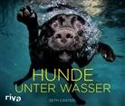 Seth Casteel - Hunde unter Wasser