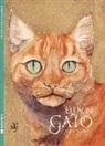 Jackie Morris - Eu son gato