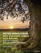 Peter Wohlleben, Kilian Schönberger - Das geheime Leben der Bäume