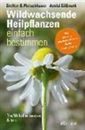 Steffen G. Fleischhauer, Steffen Guido Fleischhauer, Claudia Gassner, Viola Nehrbass, S, Roland Spiegelberger... - Wildwachsende Heilpflanzen einfach bestimmen