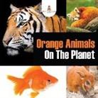 Baby - Orange Animals on the Planet