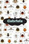 Rob Cole - Gabriela: Bug Insect Isometric Dot Pape Book Notebook Journal Book 120 Pages 6x9