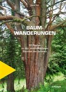 Daniel Roth - Baumwanderungen