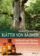 P. Ebenhoch, Peter Ebenhoch, Fischer-Rizzi, S. Fischer-Rizzi, Susann Fischer-Rizzi, Susanne Fischer-Rizzi... - Blätter von Bäumen