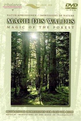 Naturimpressionen - Magie des Waldes
