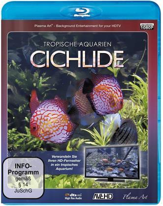 Cichlide HD - Tropische Aquarien
