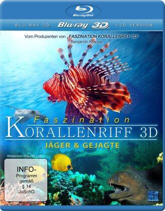 Faszination Korallenriff - Jäger und Gejagte