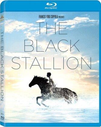 Black Stallion - Black Stallion / (Dts Sub Ws) (1979) (Widescreen)