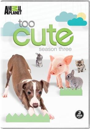 Too Cute - Season 3 (3 DVDs)