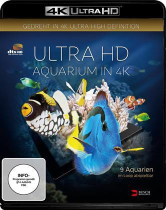 Aquarium (2014)