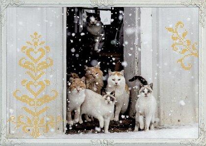 Wand-Adventskalender - Katzen-Winterträume