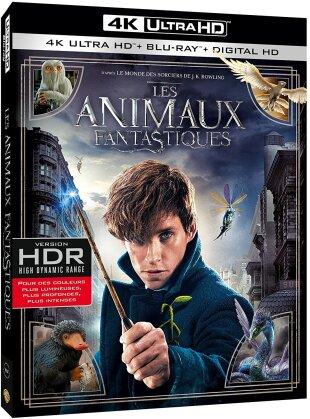 Les animaux fantastiques (2016) (4K Ultra HD + Blu-ray)