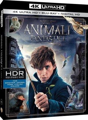 Animali fantastici e dove trovarli (2016) (4K Ultra HD + Blu-ray)