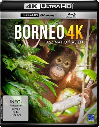 Borneo (4K Ultra HD + Blu-ray)