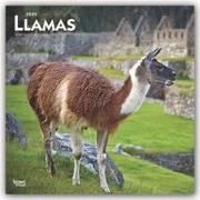 Llamas 2020 Square Wall Calendar