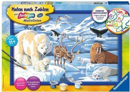 Tiere der Arktis Malen nach Zahlen Serie C