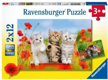 Katzen auf Entdeckungsreise (Kinderpuzzle)