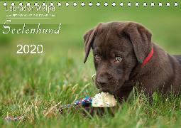 Labrador Welpe - Seelenhund (Tischkalender 2020 DIN A5 quer)