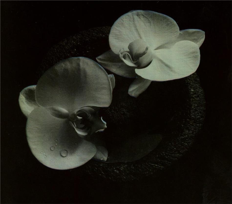 Mike Patton (Faith No More, Mr. Bungle) & Jean-Claude Vannier - Corpse Flower