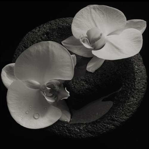 Mike Patton (Faith No More, Mr. Bungle) & Jean-Claude Vannier - Corpse Flower (LP)