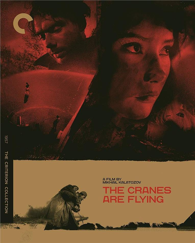 Cranes Are Flying (1957) (Criterion Collection)