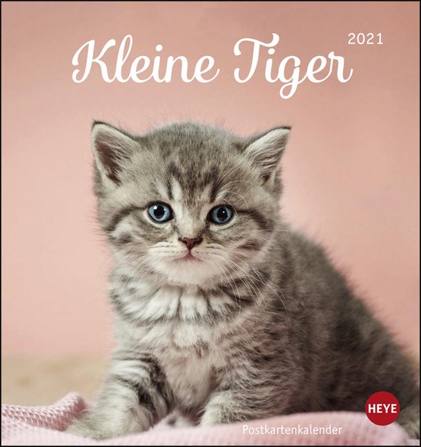 Katzen Postkartenkalender Kleine Tiger Kalender 2021