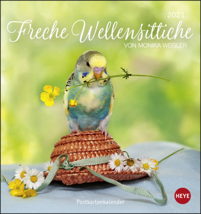 Freche Wellensittiche Postkartenkalender Kalender 2021