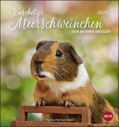Kuschelige Meerschweinchen Postkartenkalender Kalender 2021