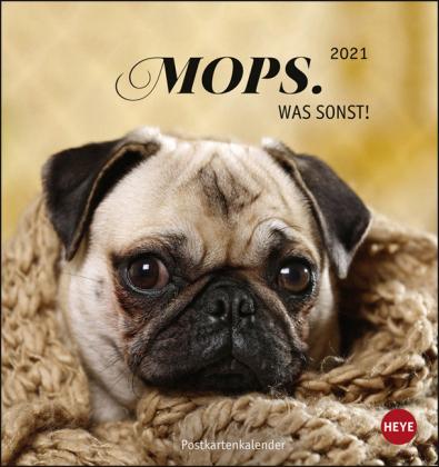 Mops Postkartenkalender Kalender 2021