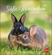 Süße Kaninchen Postkartenkalender Kalender 2021