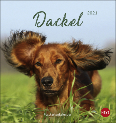 Dackel Postkartenkalender Kalender 2021