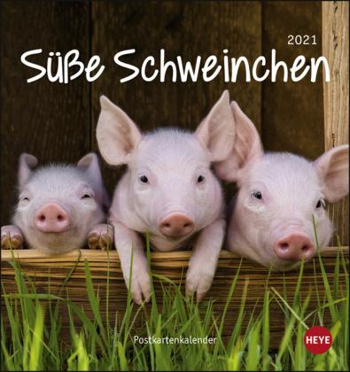 Schweinchen Postkartenkalender Kalender 2021