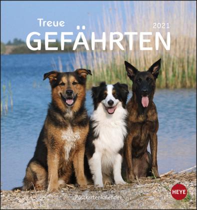 Hunde Postkartenkalender - Treue Gefährten Kalender 2021