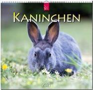 Kaninchen 2021