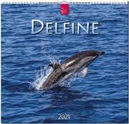 Delfine 2021