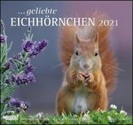 geliebte Eichhörnchen 2021 - DUMONT Wandkalender - mit den wichtigsten Feiertagen - Format 38,0 x 35,5 cm