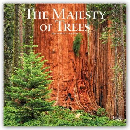 Majesty of Trees - the 2021 Square