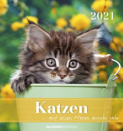 Katzen 2021 Postkartenkalender