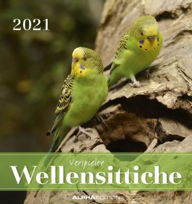 Wellensittiche 2021 - Postkartenkalender