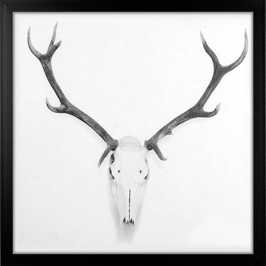 Stag Skull - Large Framed Canvas Print