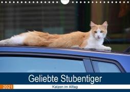 Geliebte Stubentiger - Katzen im Alltag (Wandkalender 2021 DIN A4 quer)