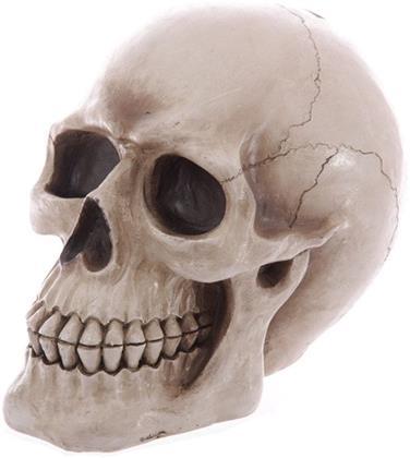 Life Size Realistic Skull - Money Box
