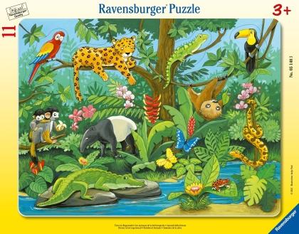 Tiere im Regenwald - 11 Teile Puzzle