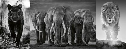 Panther, Elefanten, Löwe - 1000 Teile Puzzle