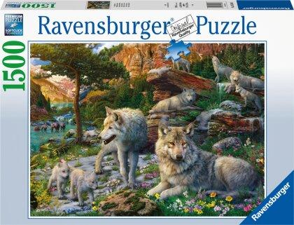 Wolfsrudel im Frühlingserwachen (Puzzle)