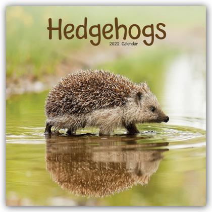 Hedgehogs - Igel 2022