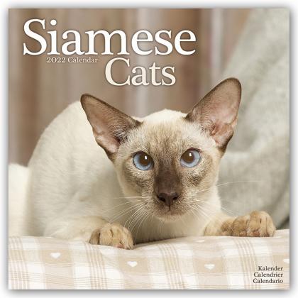 Siamese Cats - Siam-Katzen 2022 - 16-Monatskalender